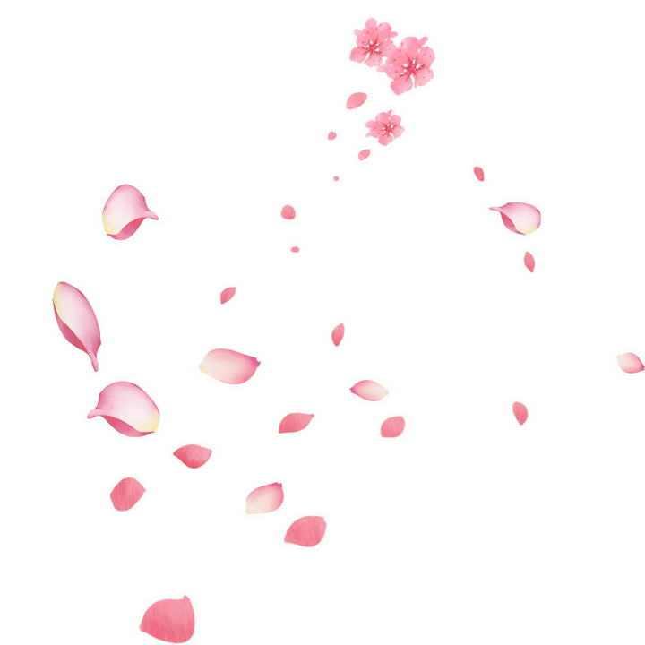 飘落的粉色桃花或樱花花瓣图片免抠素材