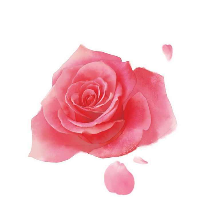 一朵水彩画风格的盛开的玫瑰花png图片素材