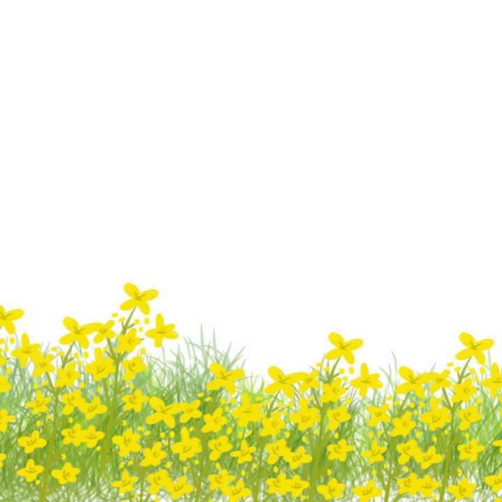 手绘插画风格春天油菜花花丛图片装饰图片免抠素材