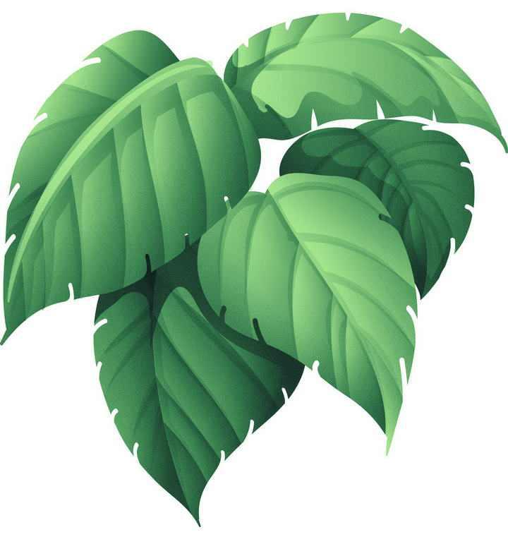 一小簇绿色的树叶装饰图片免抠素材