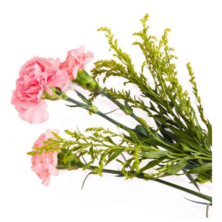 一束康乃馨花朵和叶子母亲节图片免抠素材