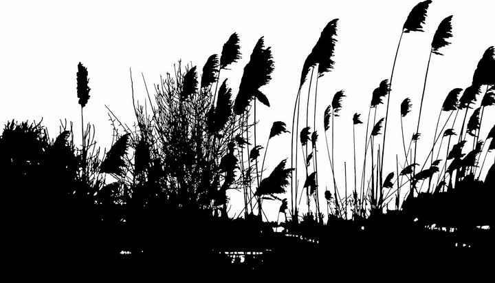 芦苇丛剪影风景图片png免抠素材