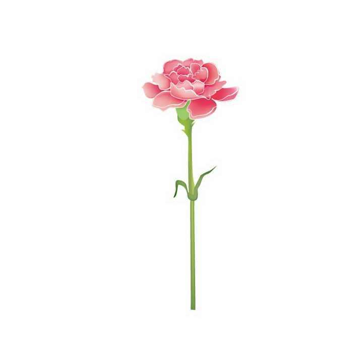 母亲节康乃馨花朵花卉图片免抠素材