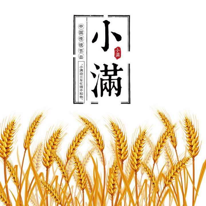 金黄色小麦麦穗24节气之小满节气图片免抠素材