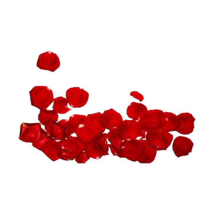 一小堆红色的玫瑰花花瓣图片免抠素材