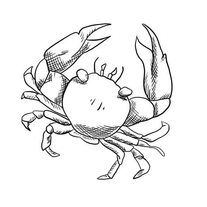 手绘线条素描风格螃蟹简笔画图片免抠素材