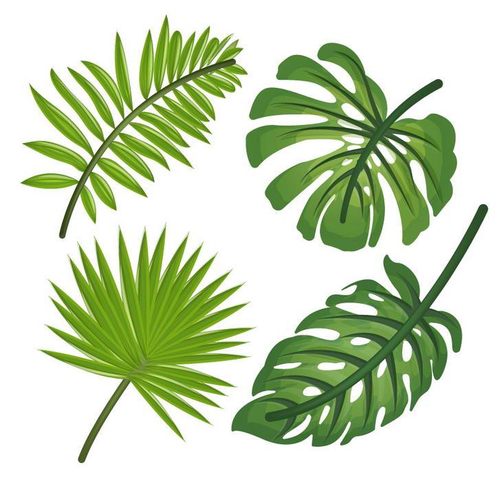四款绿叶热带植物树叶图片免抠素材
