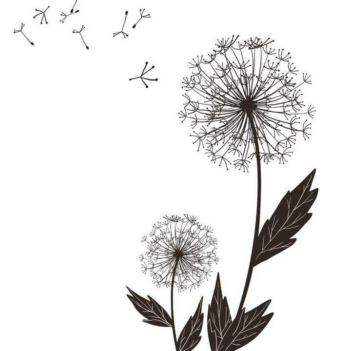 手绘风格黑色蒲公英图案图片免抠素材