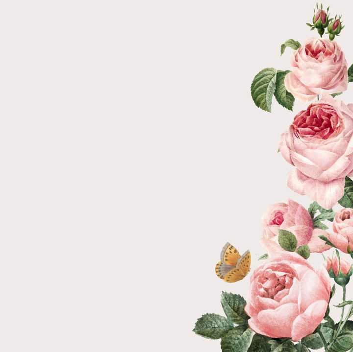 蝴蝶和粉红色牡丹花花丛装饰图片免抠素材