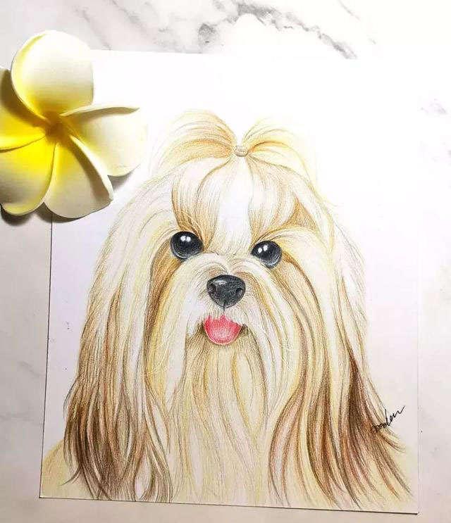 零基础素描铅笔画简笔画:教你画西施犬