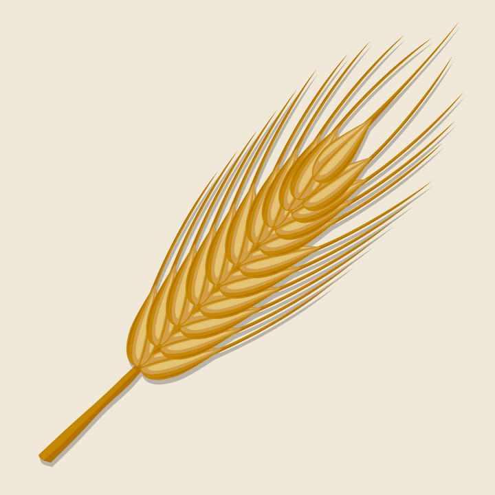 一根精细的小麦麦穗免抠矢量图片素材