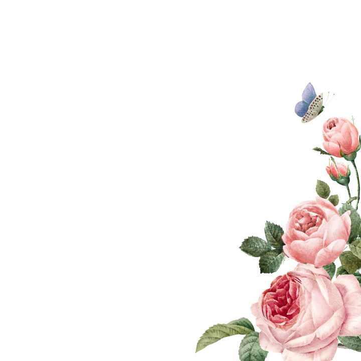 粉色牡丹花花丛边角装饰图片免抠素材