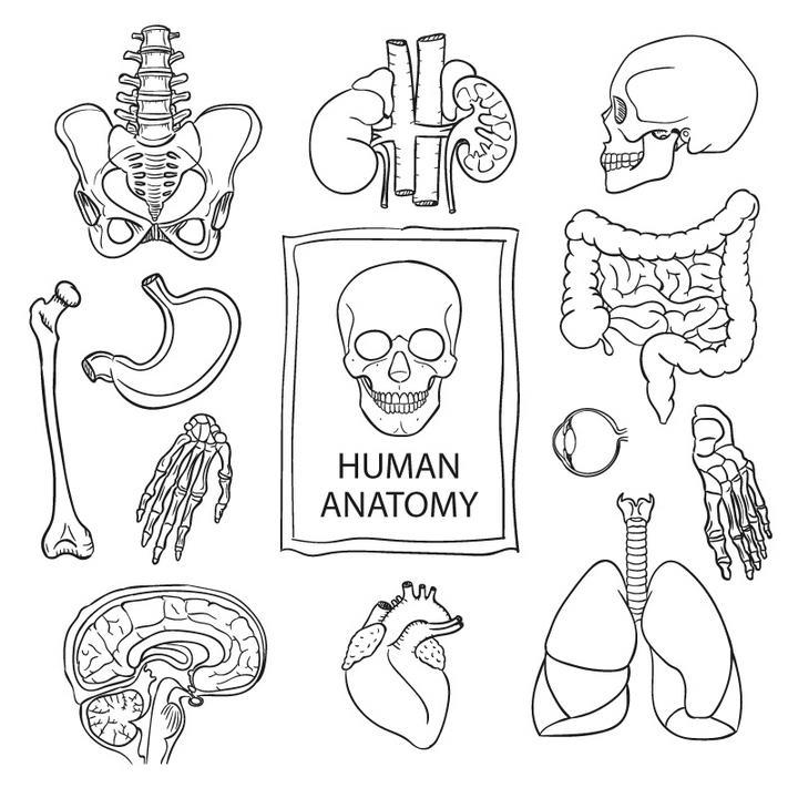 黑色线条简笔画风格手绘人体组织器官免扣图片素材