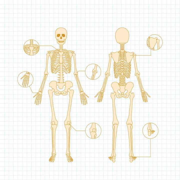 简约黄色线条人体骨骼结构示意图免扣图片素材