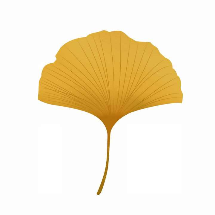 一片秋天的银杏树叶免抠PNG图片素材