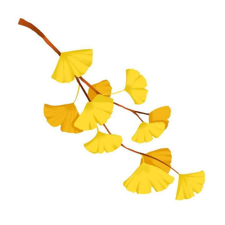 秋天一根树枝上的银杏树叶免抠PNG图片素材