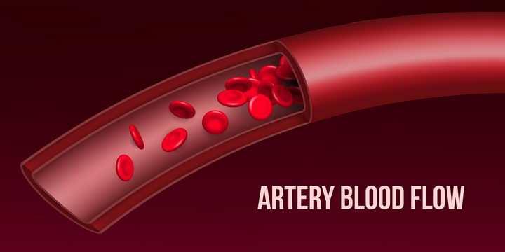 血管解剖图红细胞人体器官图片免抠矢量图
