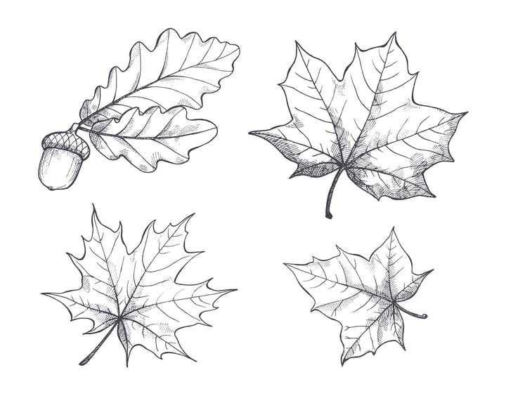 手绘简笔画素描风格松果枫叶树叶等免抠图片素材