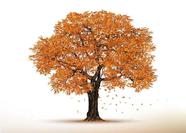 秋天枯黄树叶的大树图片免抠素材