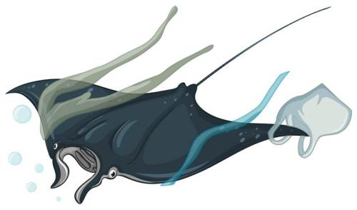 身上缠着塑料的蝠鲼海洋环境污染保护环境主题图片免抠素材