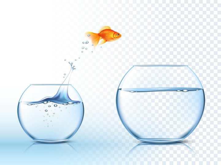 从一个半透明玻璃鱼缸中跳到另外一个鱼缸的金鱼图片免抠素材