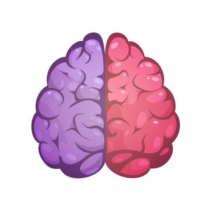 两种颜色标识的人体大脑免抠矢量图片素材