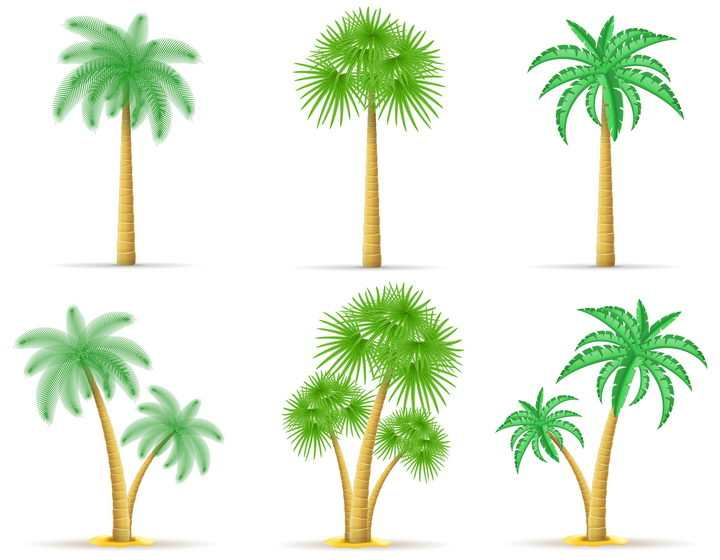 6款不同风格的热带树木免抠矢量图片素材