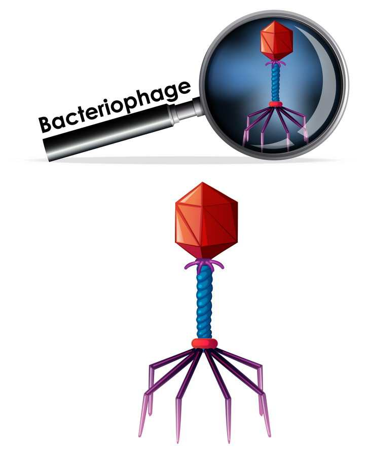 放大的噬菌体病毒杀手微生物中学生物教学图片免抠素材