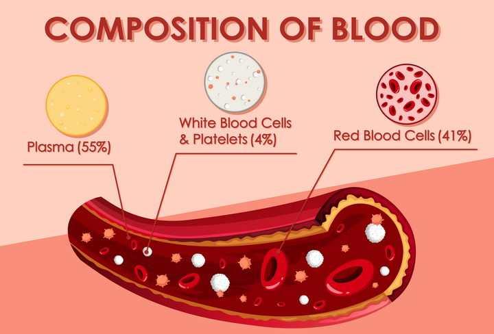 血管中的血液成分细胞红细胞白细胞血浆等中学生物教学图片免抠素材