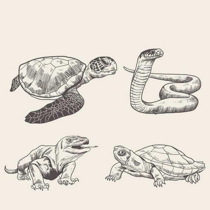 手绘插画海龟眼镜蛇巨蜥和巨龟野生动物图片免抠素材