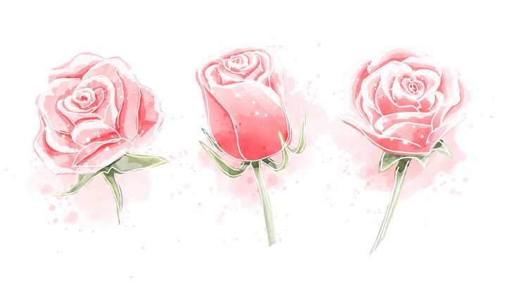 粉色玫瑰花水彩画风格图片免抠素材