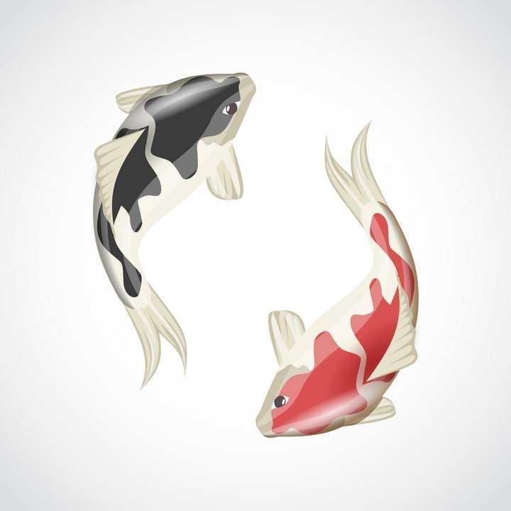 黑色和红色锦鲤鲤鱼免抠矢量图片素材