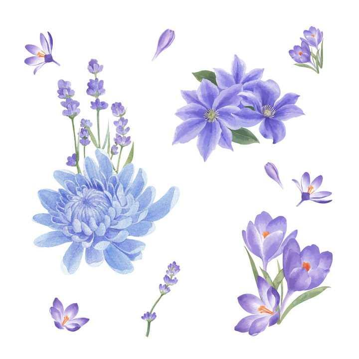 彩绘风格荷兰菊紫罗兰花朵花卉鲜花图片免抠矢量素材