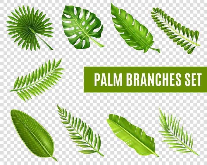 9款绿油油的绿色树叶图片免抠素材