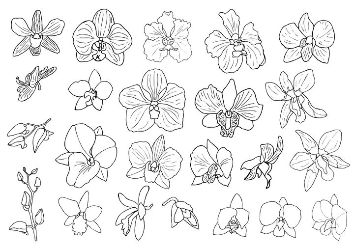 各种手绘线条风格兰花花卉花朵简笔画图片免抠矢量素材 生物自然-第1张