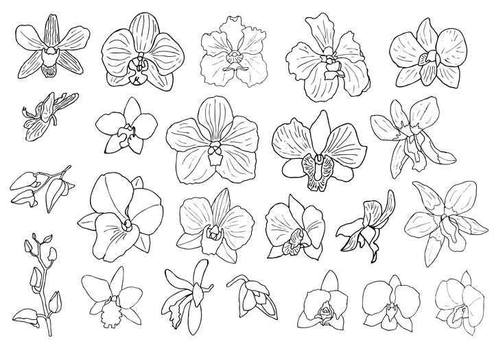 各种手绘线条风格兰花花卉花朵简笔画图片免抠矢量素材