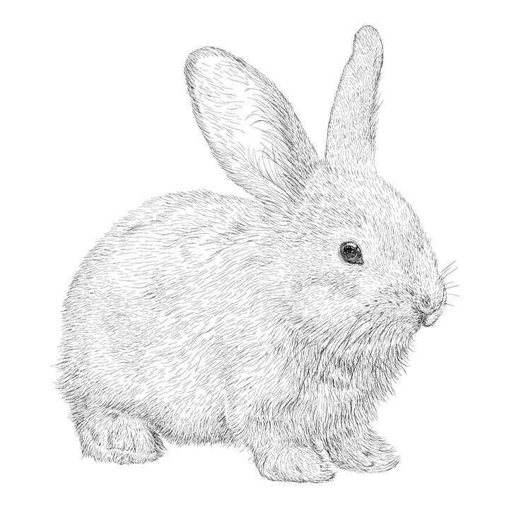 写实手绘风格毛茸茸的小兔子图片免抠矢量素材