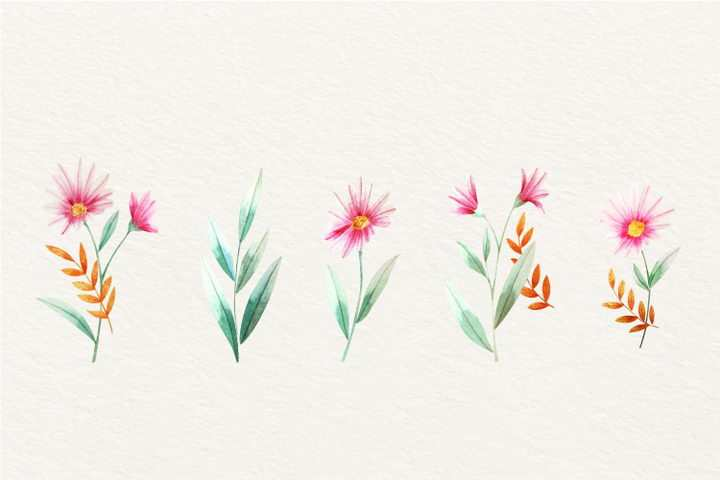 5款水彩画风格的荷兰菊花粉红色小花朵图片免抠矢量图素材