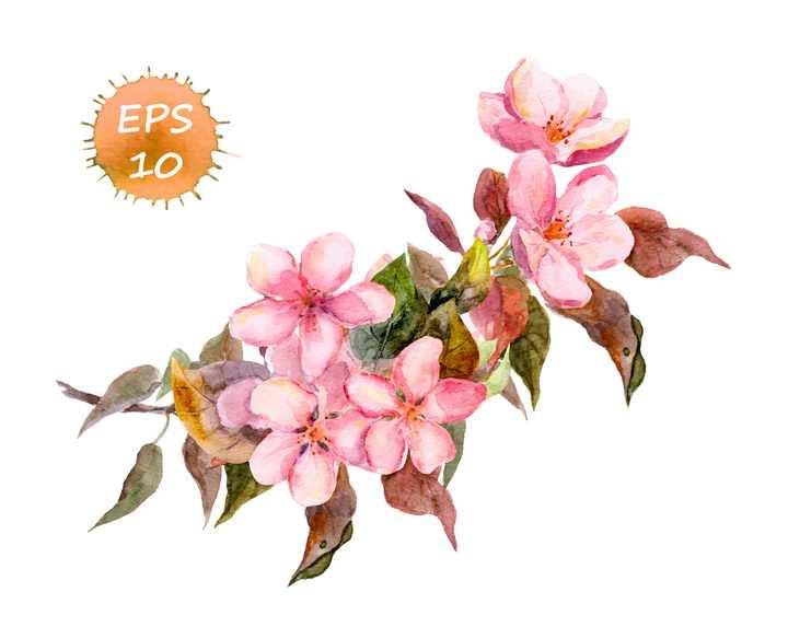 水彩画风格枝头上的粉色桃花花朵花卉图片免抠矢量素材