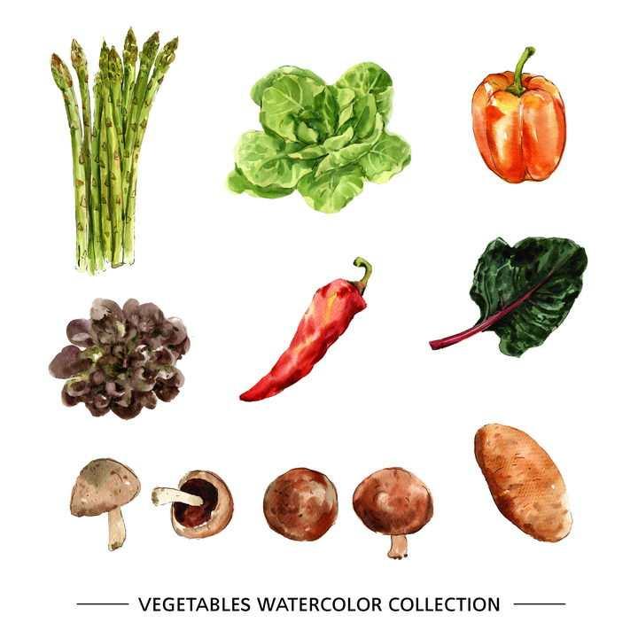 水彩画风格芦笋生菜灯笼椒辣椒菠菜蘑菇土豆等蔬菜图片免抠矢量素材