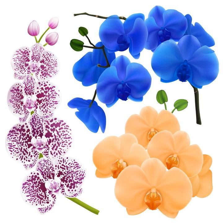 各种带斑点的兰花花朵和黄色蓝色蝴蝶兰图片免抠矢量素材 生物自然-第1张