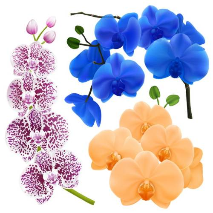 各种带斑点的兰花花朵和黄色蓝色蝴蝶兰图片免抠矢量素材