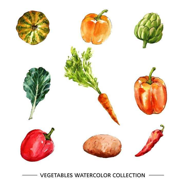 水彩画风格南瓜灯笼椒青菜胡萝卜土豆等蔬菜图片免抠矢量素材
