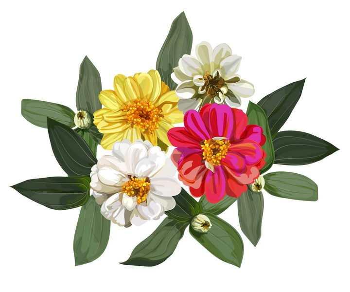白色红色黄色荷兰菊花卉花朵免抠矢量图素材