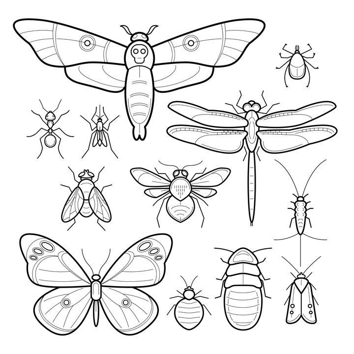 手绘线条风格蛾子蝴蝶苍蝇蜜蜂蚂蚁甲虫等昆虫图片免抠矢量素材 生物自然-第1张