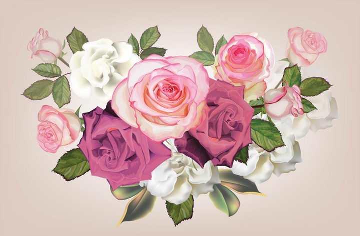 粉色红色白色月季花花朵花卉鲜花图片免抠矢量素材