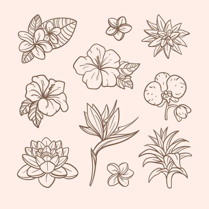 线条素描风格各种花朵花卉兰花荷花喇叭花等图片免抠矢量素材