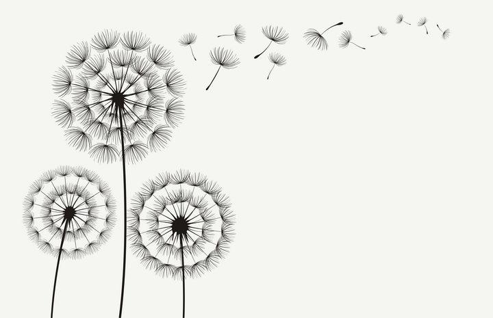 简约的蒲公英花朵和飞舞的蒲公英花絮剪影图片免抠矢量素材