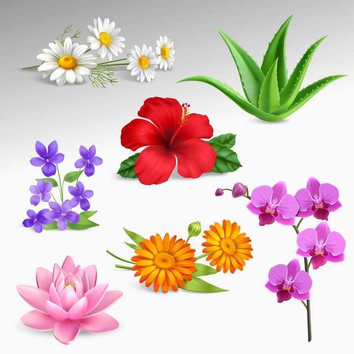 白色的菊花芦荟紫色蝴蝶兰粉色荷花等花卉花朵图片免抠矢量素材