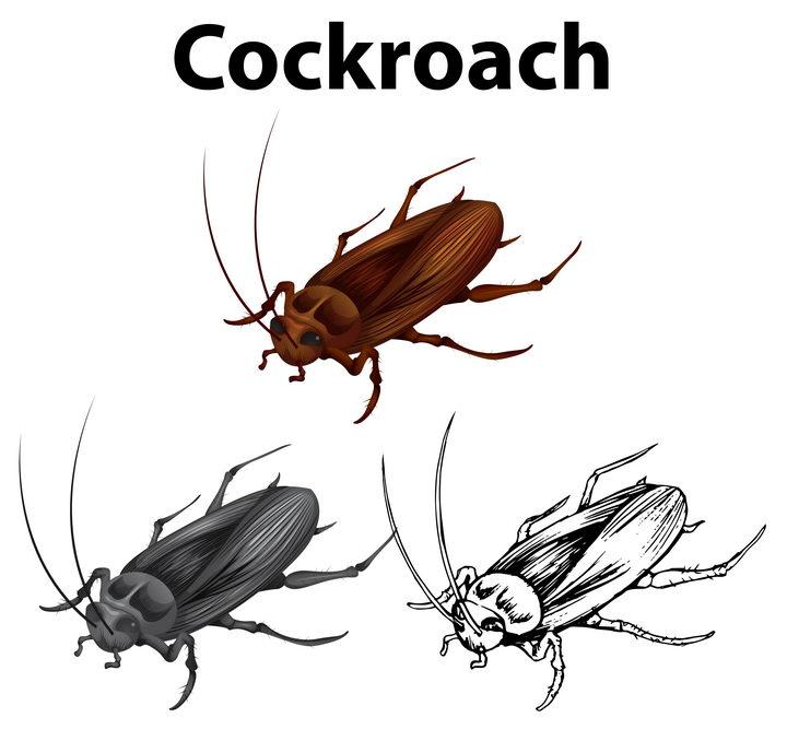 彩色和白色的手绘蟑螂消灭害虫图片免抠矢量素材 生物自然-第1张